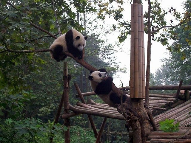 Pandas on and under a branch