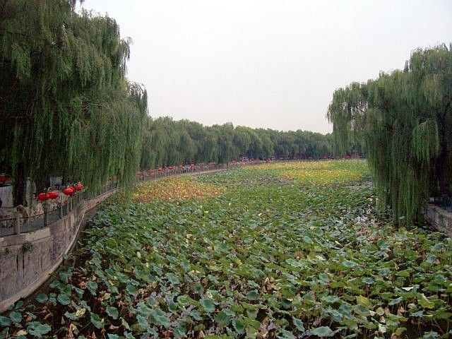 Beihai park - water lilies and weeping willows