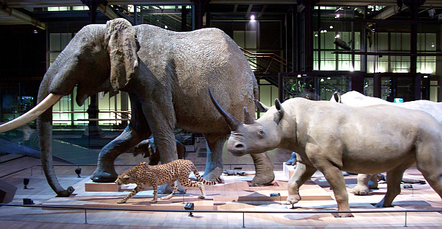 Buffon's Natural history museum - Elephant, rhinoceros, and cheetah
