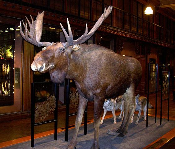 Buffon Natural History