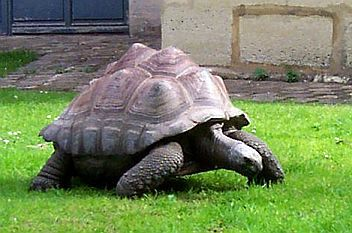 Photo m nagerie du jardin des plantes tortue g ante for Jardin remarquable ile de france
